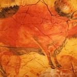 bisonte_web